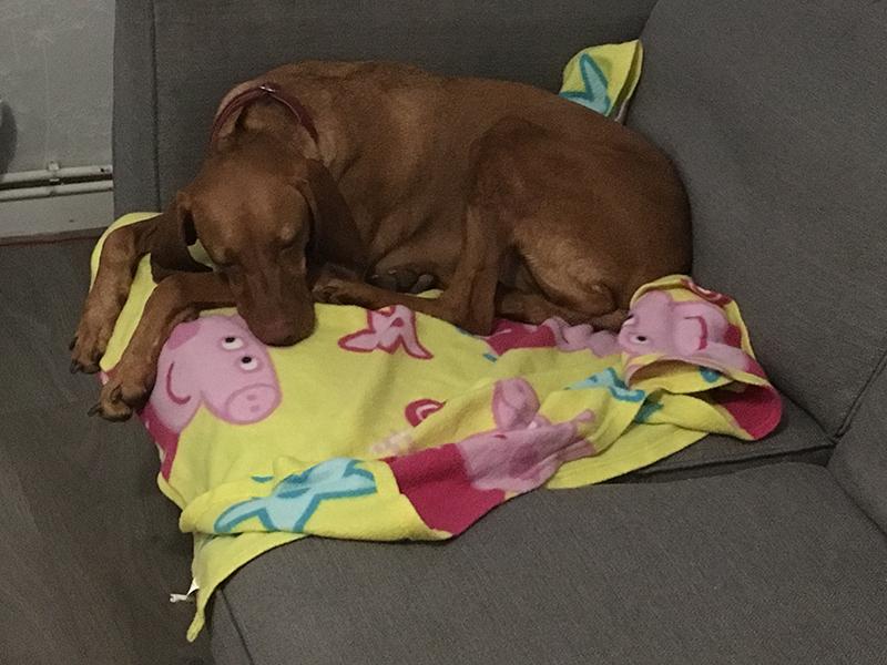 Home Dog Boarding